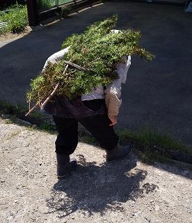 暑い日は木を背負って「常に木陰」状態で農作業